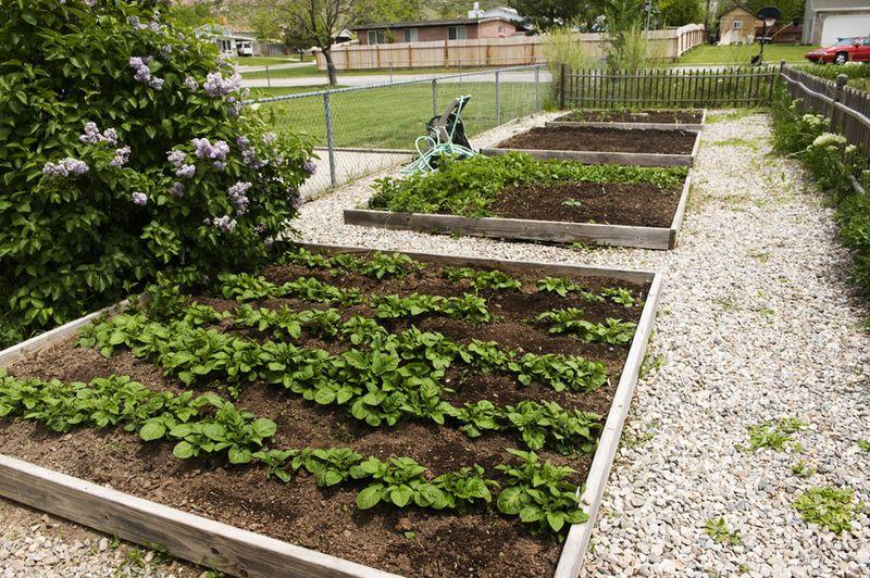 Garden2614